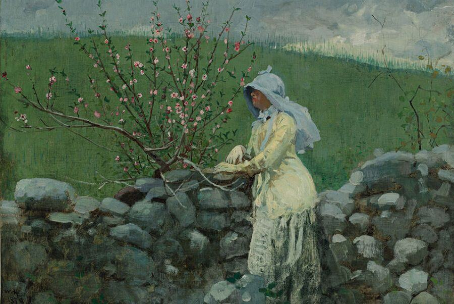 Peach Blossoms - by Winslow Homer
